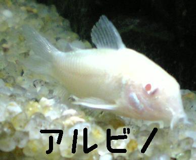 Image447